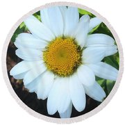 Single Daisy Round Beach Towel