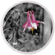 Single Pink Columbine Round Beach Towel
