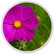 Single Purple Cosmos Flower Round Beach Towel