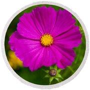 Single Purple Cosmos Flower Round Beach Towel