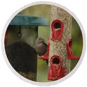 Single Songbird At Feeder Round Beach Towel