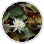 Single Water Lilly  Round Beach Towel
