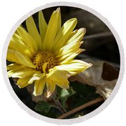 Single Yellow Mum Round Beach Towel