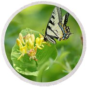 Sipping Swallowtail Round Beach Towel