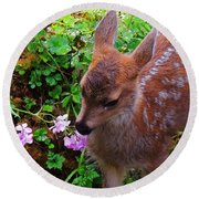 Sitka Black-tailed Fawn Round Beach Towel