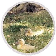 Sitting Ducks Round Beach Towel