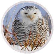 Sitting Snowy Owl Round Beach Towel