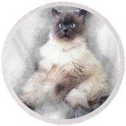 Sketch Of Regal Himalayan Cat - Not Round Beach Towel