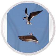 Skimmers In Flight Round Beach Towel