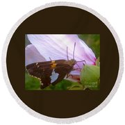 Skipper Butterfly With White And Orange Colors Round Beach Towel