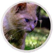 Skippy Feral Cat Portrait 0369b Round Beach Towel