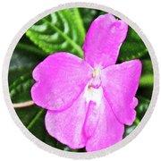 Sky Flower In Huntington Botanical Gardens In San Marino-california  Round Beach Towel
