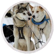 Sled Dogs Round Beach Towel by David Buhler