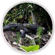 Sleeping Alligator Round Beach Towel
