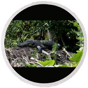 Sleeping Alligator Round Beach Towel