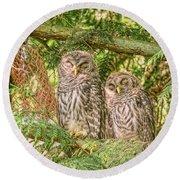 Sleeping Barred Owlets Round Beach Towel