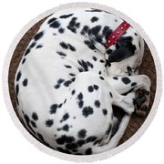 Sleeping Dalmatian Round Beach Towel