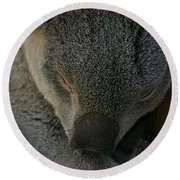 Sleeping Koala Bear Round Beach Towel