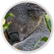 Sleeping Koala - Canberra - Australia Round Beach Towel