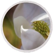 Sleeping Magnolia Round Beach Towel