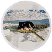 Sleeping Puppy Round Beach Towel