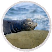 Sleeping Sea Lion Round Beach Towel