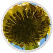 Sleeping Sunflower Round Beach Towel