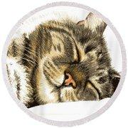 Sleeping Tabby Cat  Round Beach Towel