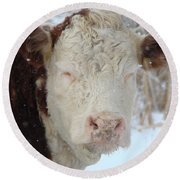 Sleepy Winter Cow Round Beach Towel