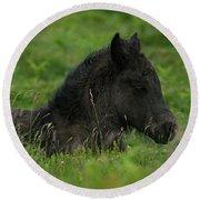 Sleepy Dartmoor Foal Round Beach Towel