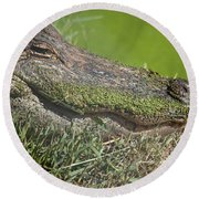 Sleepy Papa Gator Round Beach Towel