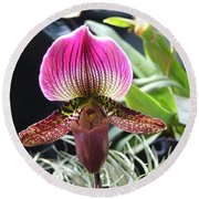 Slipper Foot Orchid Round Beach Towel