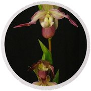 Slipper Foot Orchids Round Beach Towel