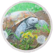Slow And Steady Round Beach Towel