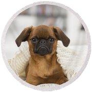 Small Brabant Griffon, Petit Brabancon, Dog  Round Beach Towel