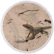 Small Brown Lizard Sitting On A White Sand Beach Round Beach Towel