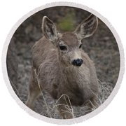 Small Fawn In Tombstone Round Beach Towel