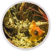 Small Fish In An Aquarium Round Beach Towel