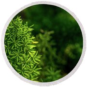 Small Plants Round Beach Towel