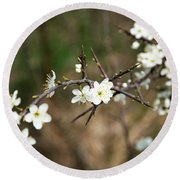 Small White Flowers Of Thorns Round Beach Towel