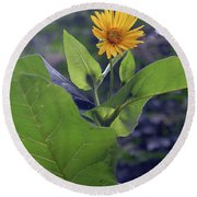 Small Yellow Flower And Green Big Leaves In The Sun Light. Round Beach Towel