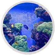 Smaller Fish In Monterey Aquarium-california  Round Beach Towel