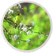 Smelling The Cherry Blossom Male  American Goldfinch Round Beach Towel