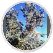 Smoke Tree In Bloom With Blue Purple Flowers Round Beach Towel
