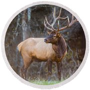 Smoky Mountain Elk II - North Carolina's Cataloochee Valley Wildlife Round Beach Towel
