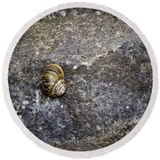 Snail At Ballybeg Priory County Cork Ireland Round Beach Towel
