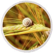 Snails On Wheat Round Beach Towel