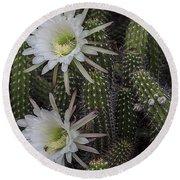 Snake Cactus Flowers Round Beach Towel