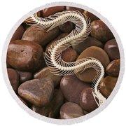 Snake Skeleton  Round Beach Towel by Garry Gay