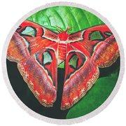 Snakehead Moth Round Beach Towel